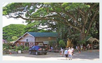 Tropical Farms - The Macadamia Nut Farm Outlet